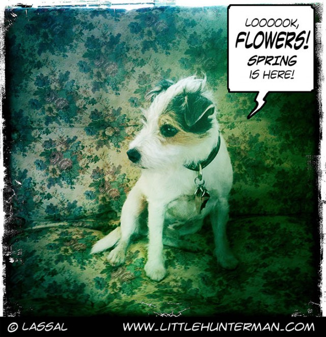 Little Hunterman Daily Cartoons 2014-03-19, Sneezing is in the Air