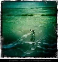 LittleHunterman - Doggie Beach Express