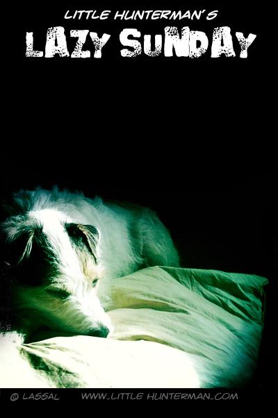 Little Hunterman - Lazy Sunday Nap