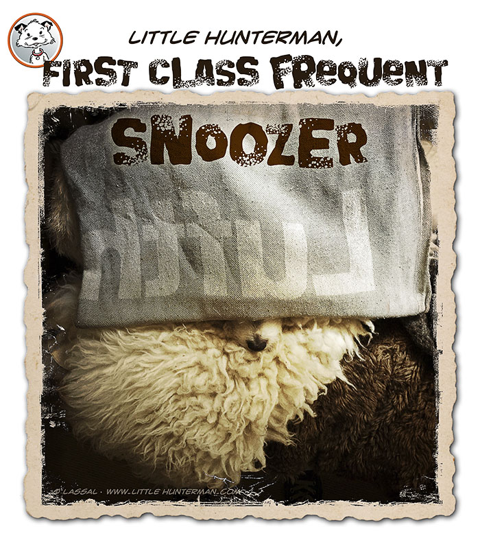 Lazy First Class Frequent Snoozer Sunday!