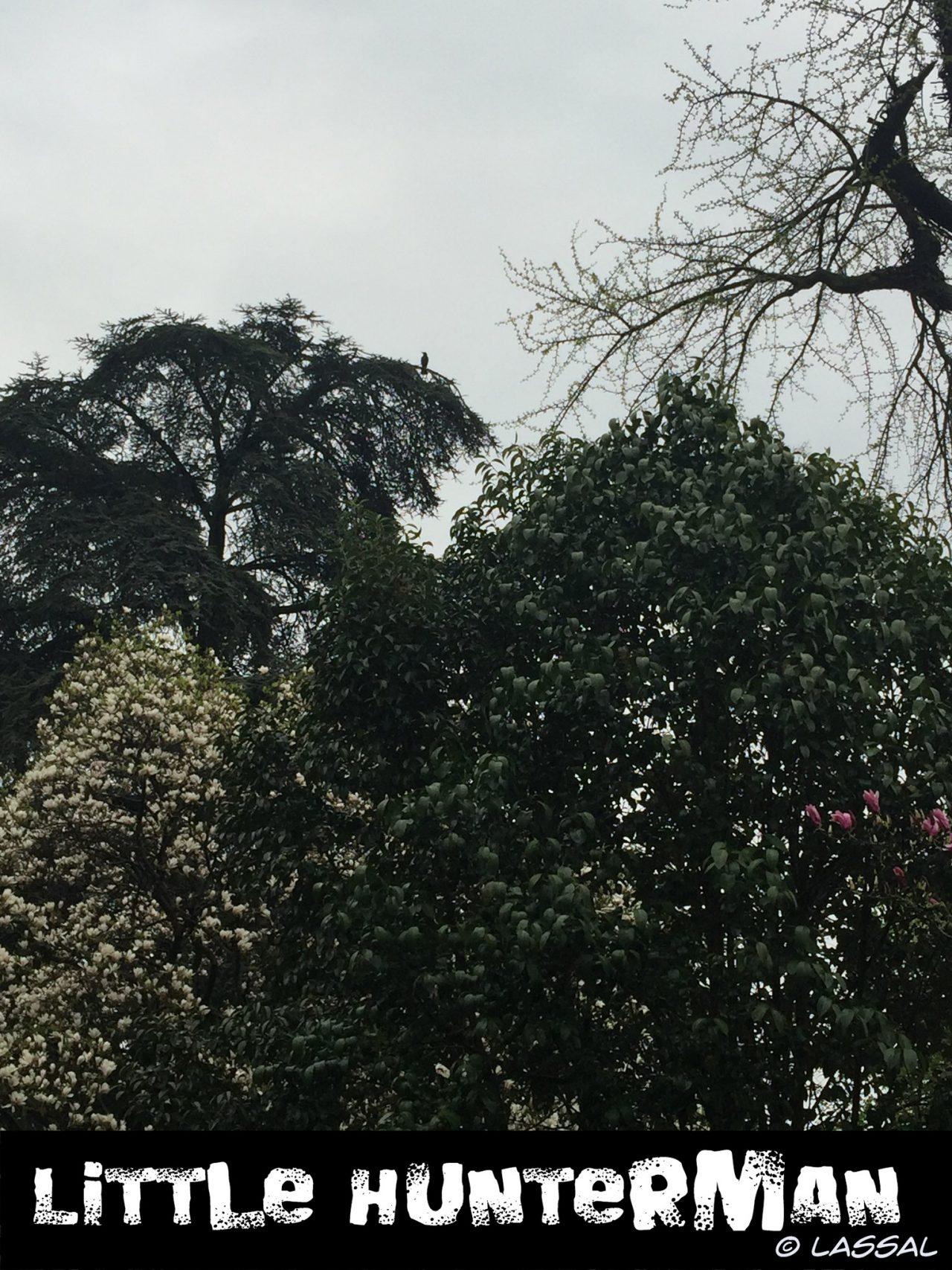 Hinkemann watching from a tree top