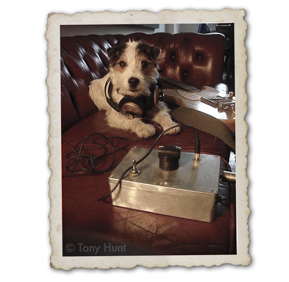 Doorbell interrupting doggie book dictation