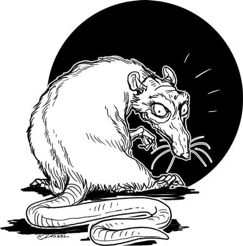 The naughty rat
